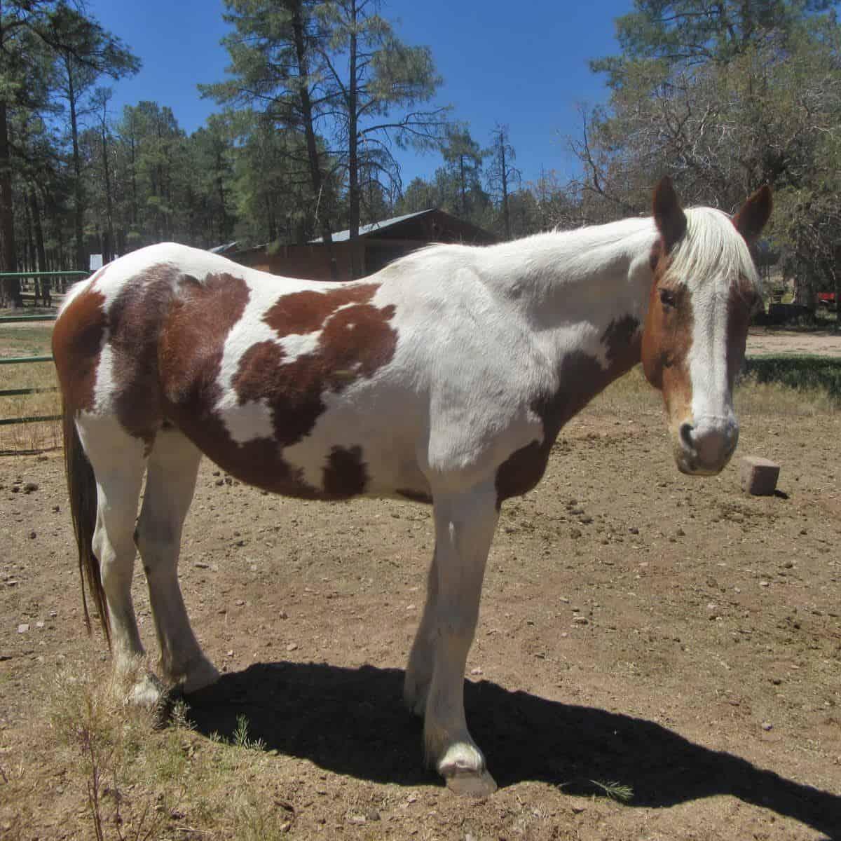 Buffalo Gal, a horse at Geronimo Trail Guest Ranch