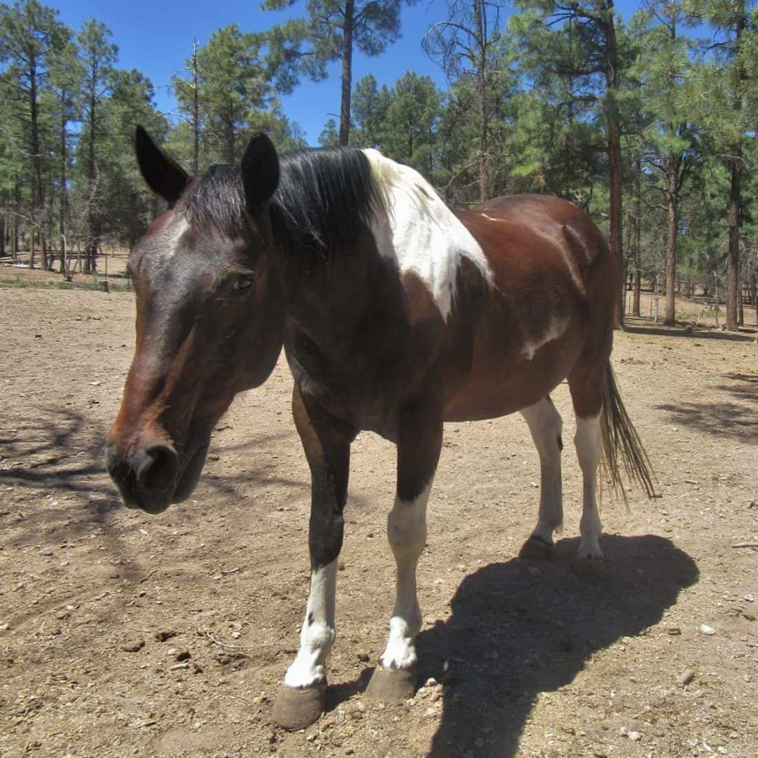 Casey, a horse at Geronimo Trail Guest Ranch