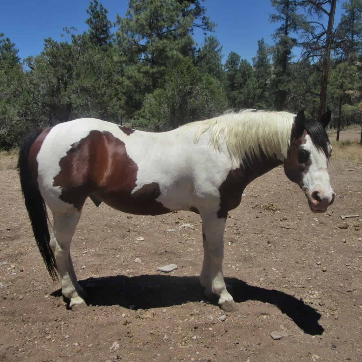 Lightning, a horse at Geronimo Trail Guest Ranch