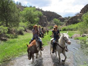 Gila National Forest Summer