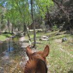 Gila Wilderness