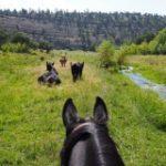 view through horse ears