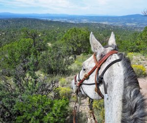 Mountain overlooks on a horseback riding tour.