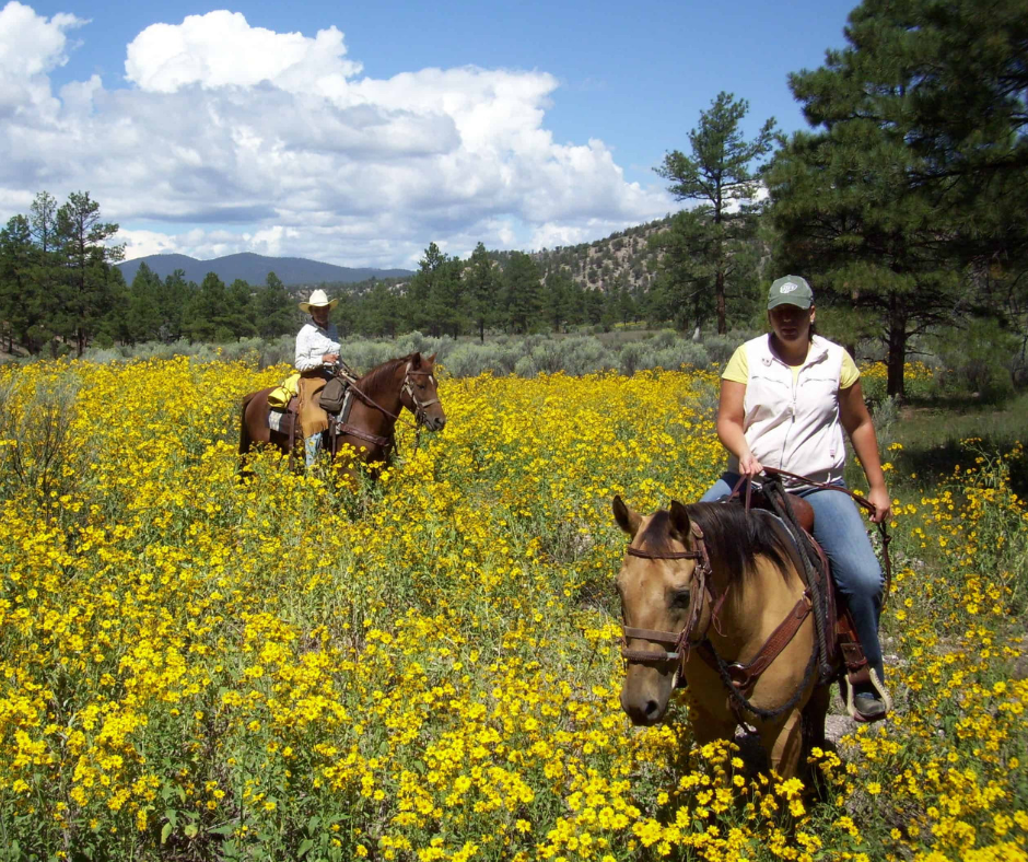 Horseback riding in a field full of flowers on Geronimo Trail Guest Ranch.