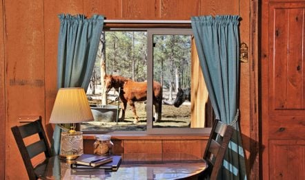 New Mexico Dude Ranch & Guest Ranch | Geronimo Trail Guest Ranch