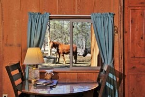 View outside room of horses
