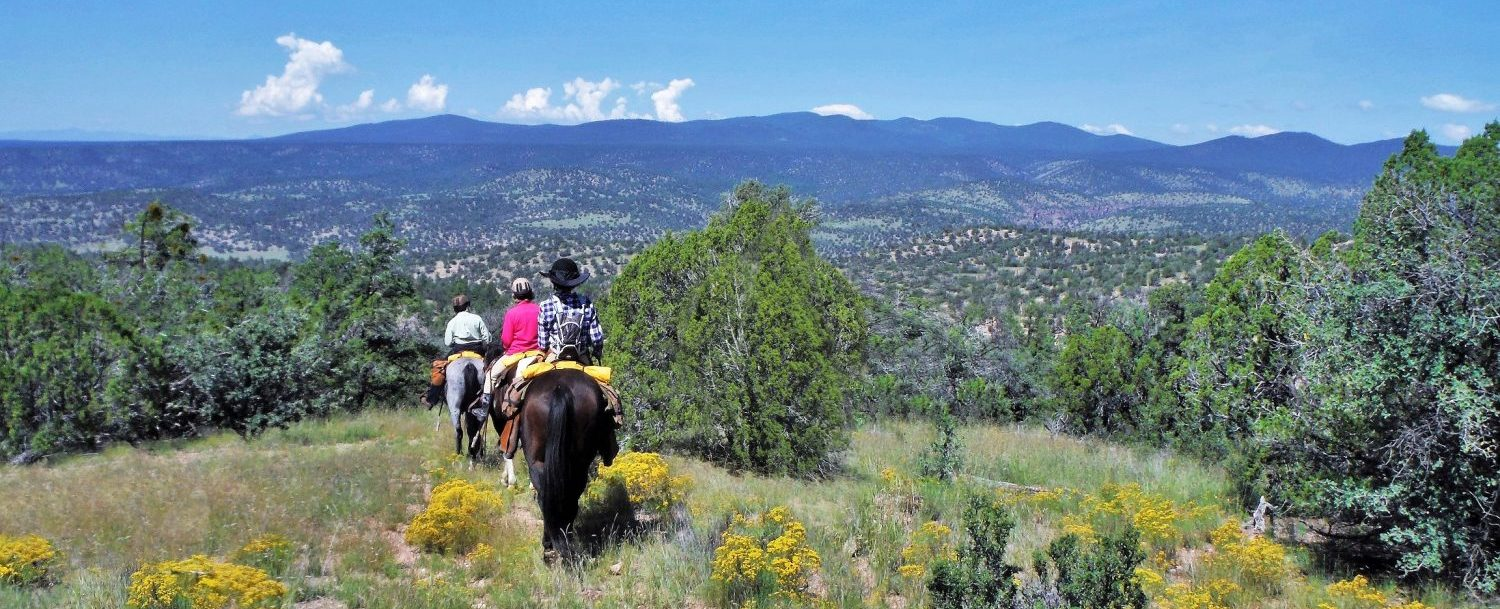 Riding Horses with views of Black Mountain
