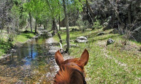 ears in wilderness