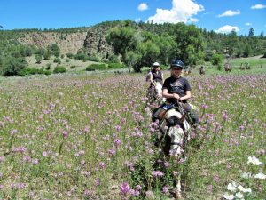 Horseback Riding through Rocky Mountain Bee Plant at Geronimo Trail Guest Ranch, New Mexico