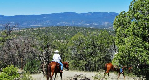 Learn how to get from Albuquerque to the Gila National Forest.