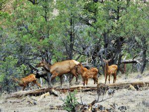 Gila National Forest Wildlife