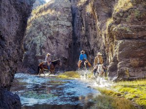 Trail Riding through the Gila National Forest